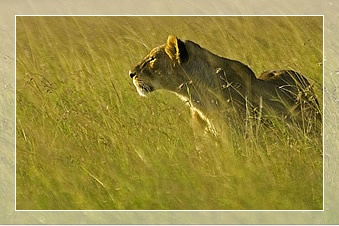 safaris in tanzania wildlife safari