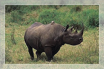 safaris in tanzania big five safari